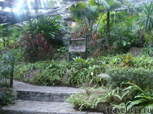 Koh Samui, butterfly garden , cад бабочек Самуи