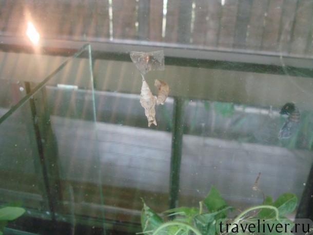 Koh Samui, butterfly garden, cад бабочек Самуи