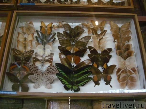 cад бабочек Самуи