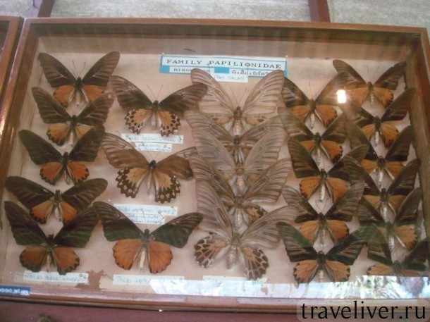 Koh Samui butterfly garden, cад бабочек Самуи