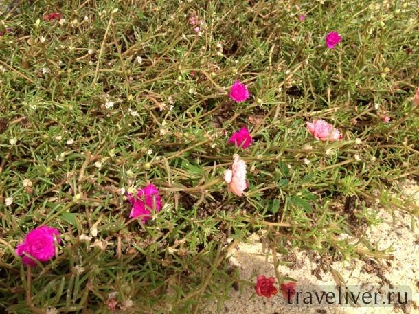 Цветы Самуи