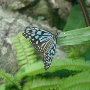 Сад бабочек на Самуи (Butterfly Garden Samui)